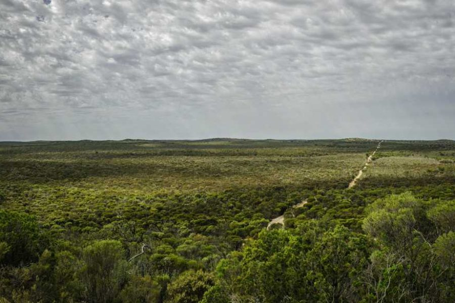 Grit and passion: the story of Bush Heritage Australia