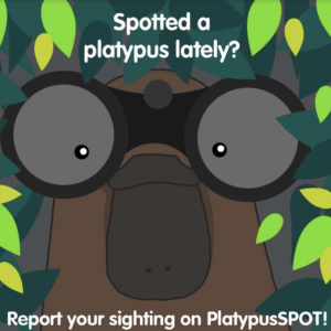 Platypus Awareness: Helping Melbourne Water shed light on a unique Australian