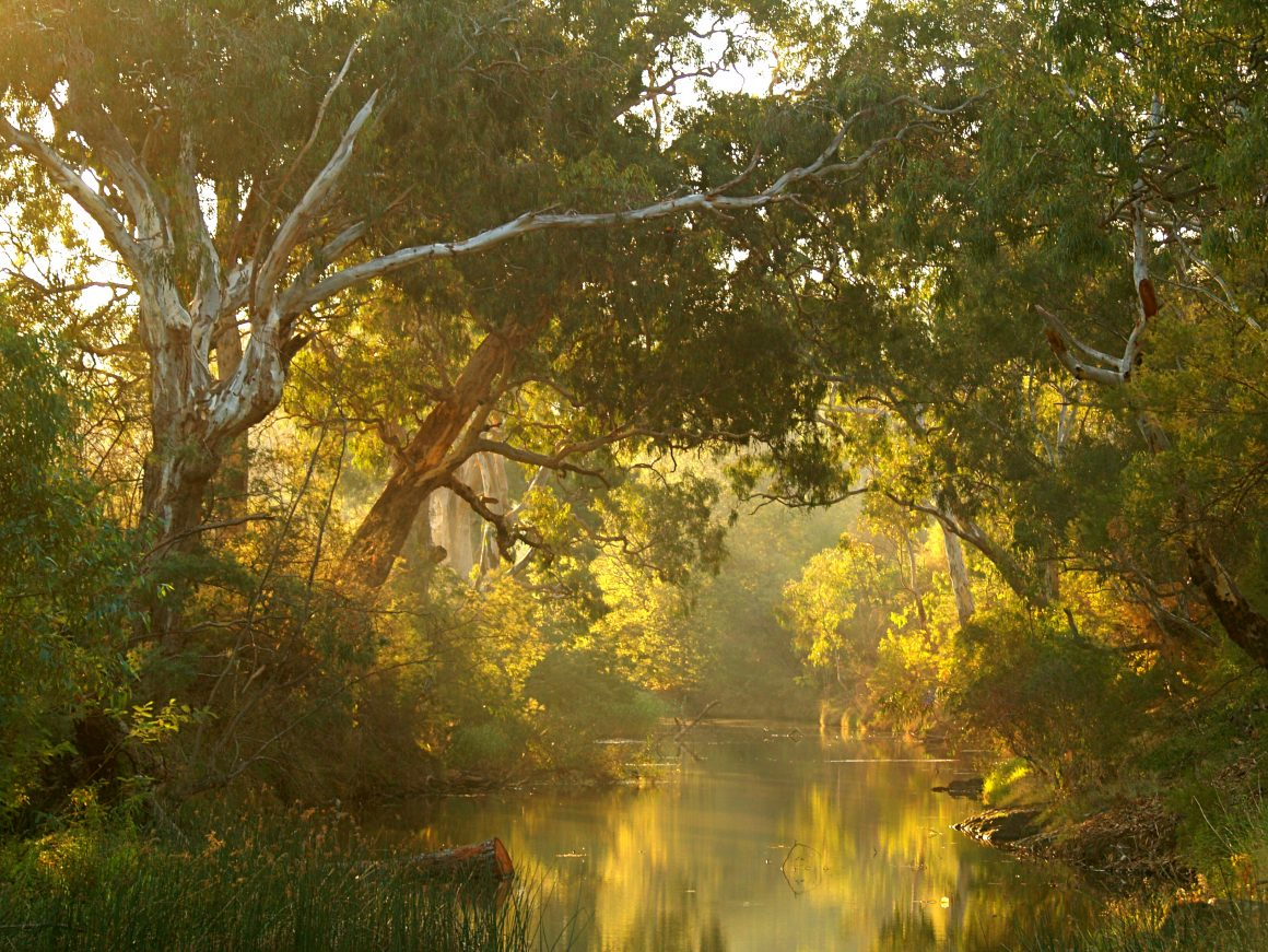 Not as we know it: along the Maribyrnong