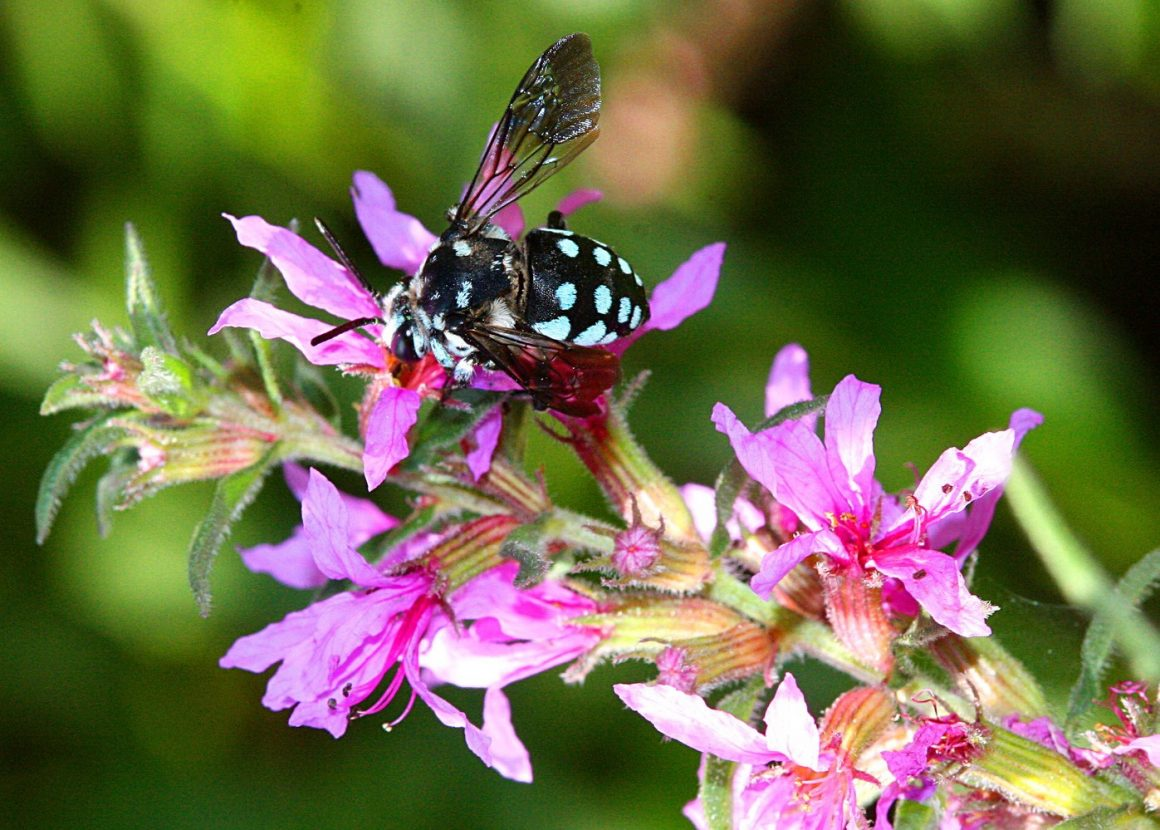 Wetland plants: Providing indigenous food for arthropods in the heart of summer