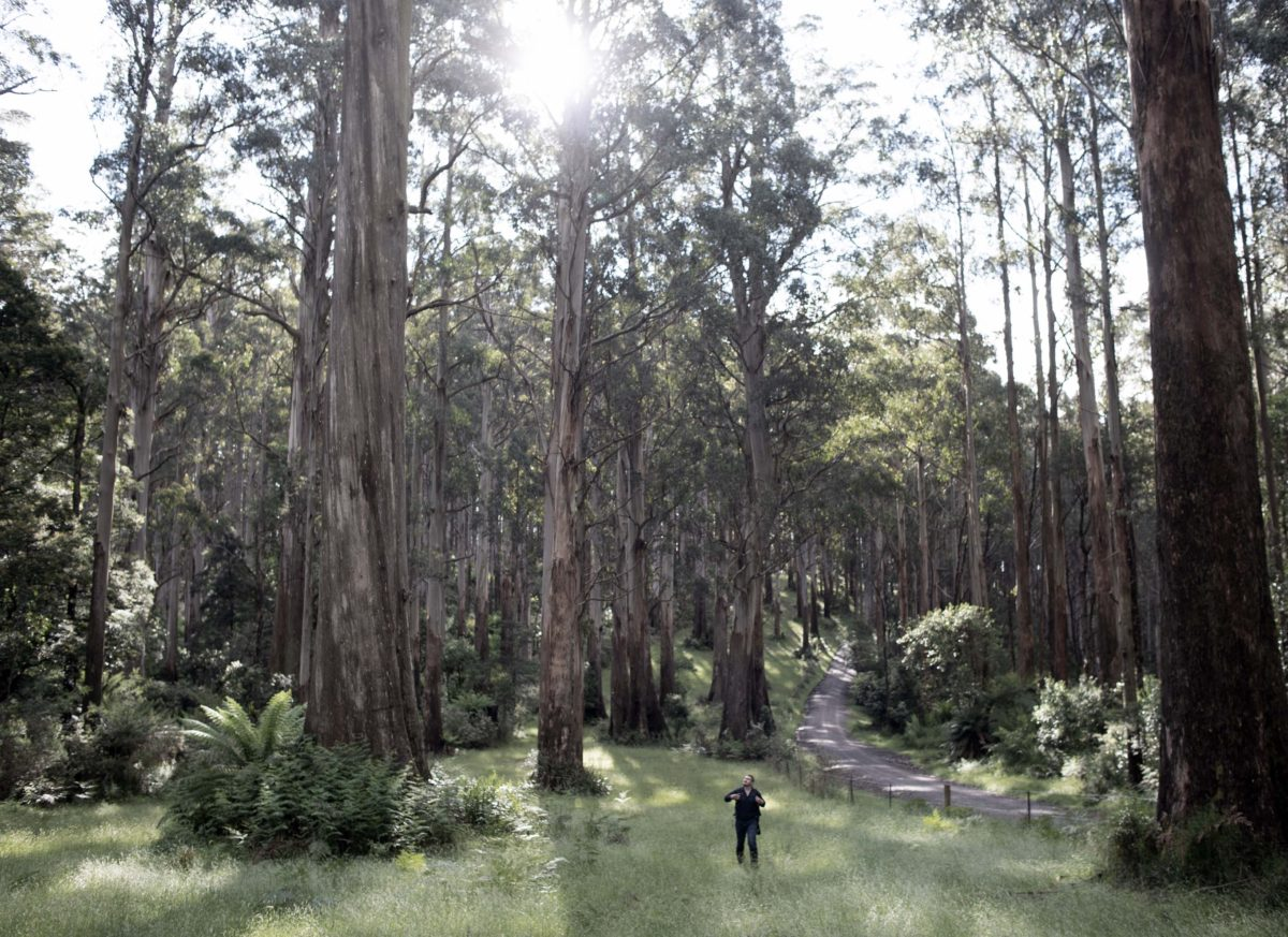 Eucalypt: Documentary Series