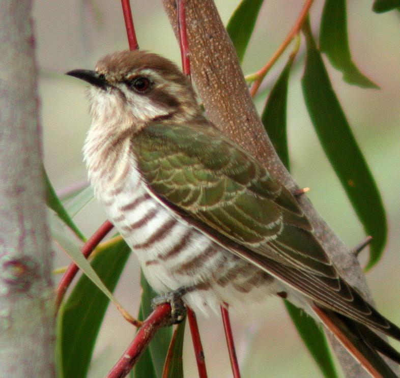 Melbourne's Parasites: Biodiversity Unseen