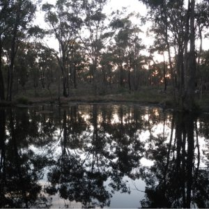 A cold winter in a box-ironbark forest is far from a silent spring
