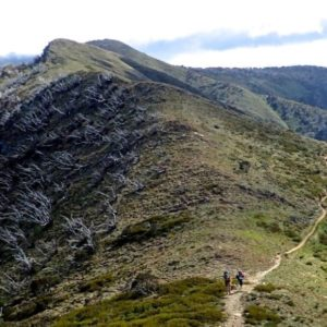 Mount Feathertop & The Razorback