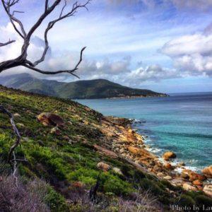 Beauty Abound: The Hidden Wonders of Wilsons Promontory