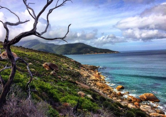Beauty Abound: The Hidden Wonders of Wilsons Promontory
