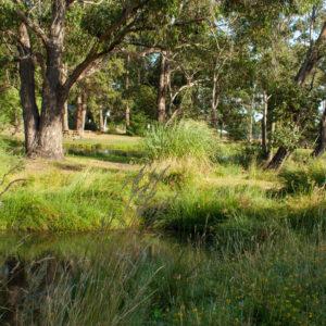 Wombat Trail