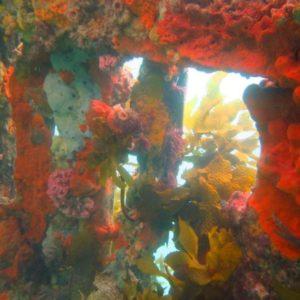 Blairgowrie Pier & Marina