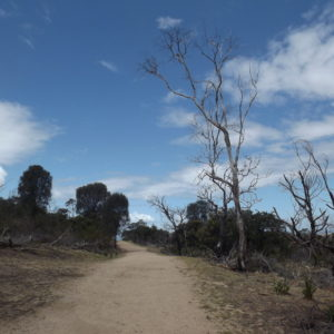 Big Rock Track, You Yangs