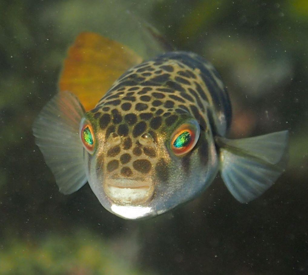 Toadfish: Getting a Bad Rap?