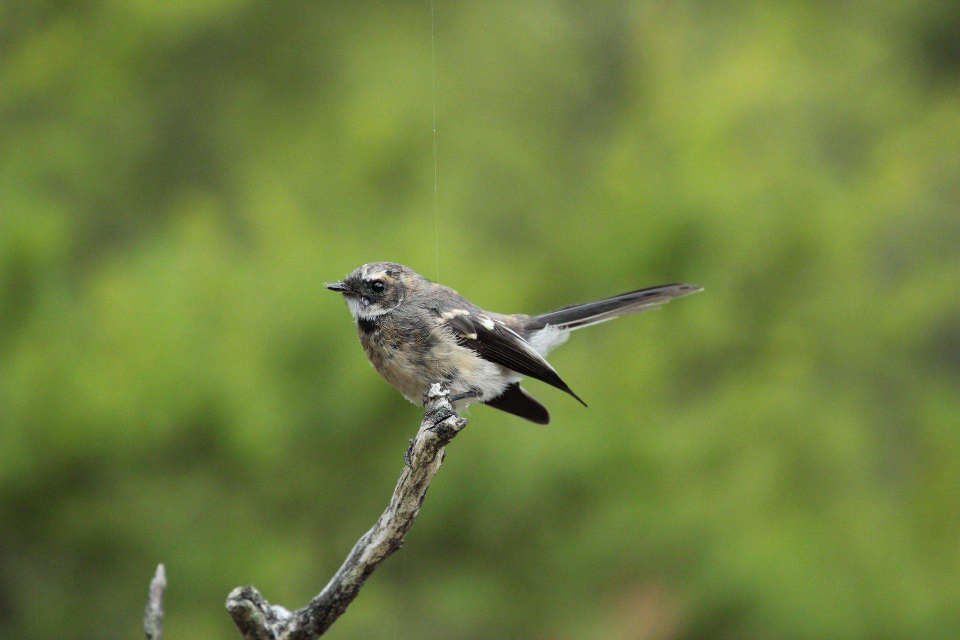 Chasing birdsong