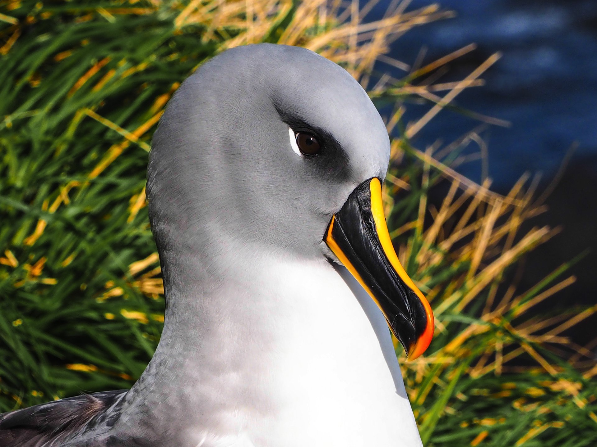 Awestruck by albatrosses