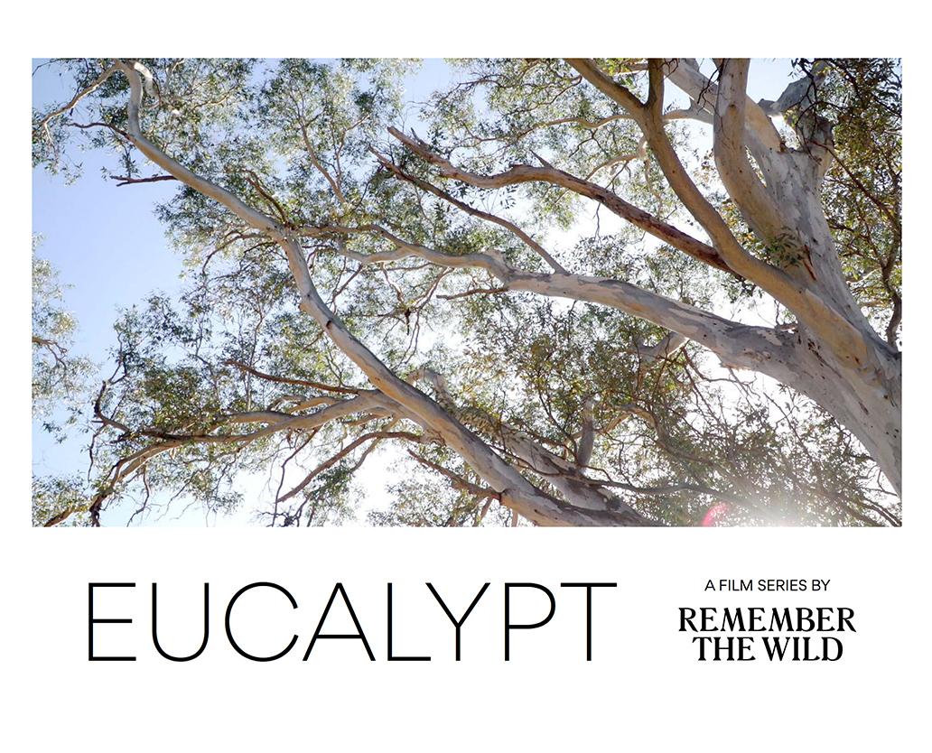 Eucalypt: Documentary Series