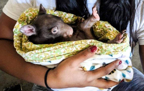 The wildlife rescue wonder women of Coopers Animal Refuge