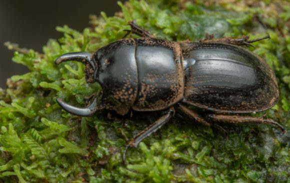 Build your own Stag Beetle Bungalow: a DIY guide
