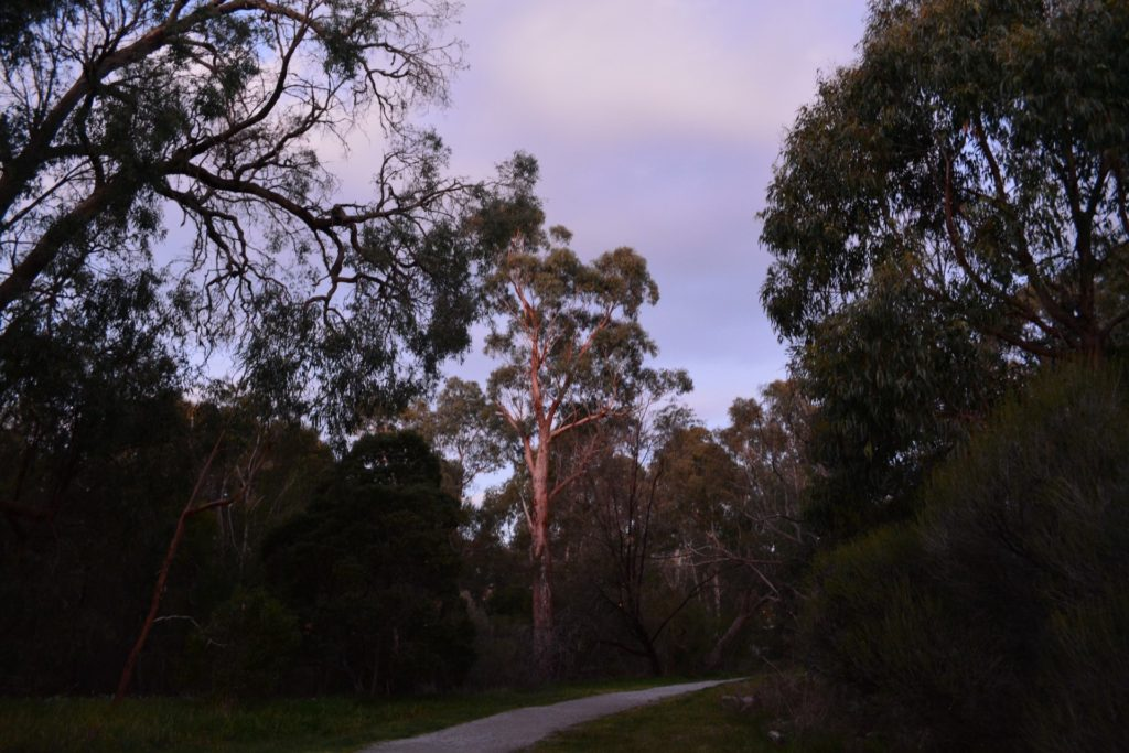 Blackburn Creek Path at sunset.