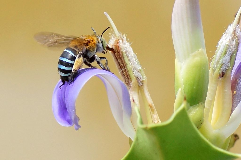 Build a backyard bee sanctuary in 4 easy steps