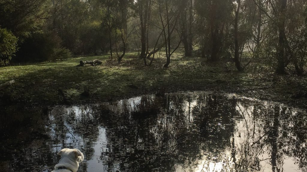 a shadowy pool at Black Hill Reserve, reflecting the morning sun