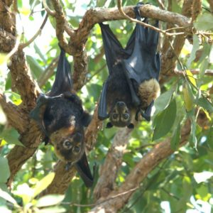 Transform your garden into a backyard bat haven
