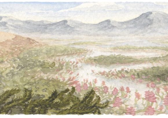 A time-travelling botanist and Australia's first plants