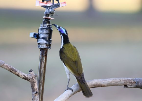 3 add-ons guaranteed to bring birds to your backyard