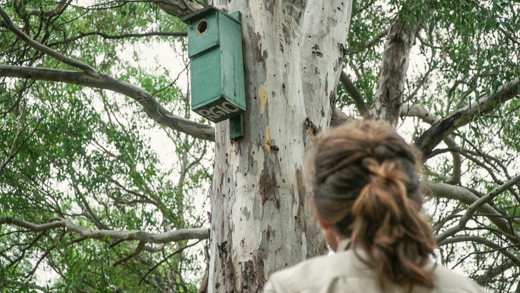 Nestbox projects provide vital homes for threatened wildlife and often provide opportunities for community members to get involved in threatened species conservation