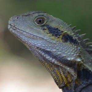 Bring lizards to your garden with a DIY dragon's den
