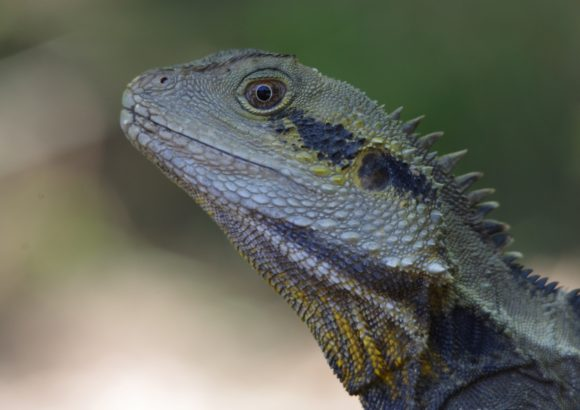 Bring lizards to your garden with a DIY dragon's den