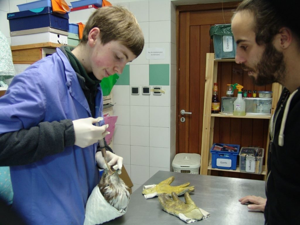 Elliot when he was volunteering at a raptor rehabilitation centre in Southern France. Image provided by Elliot Connor.