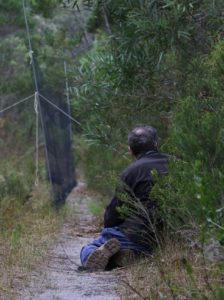 One of the catch team, hiding out in wait for bristlebirds