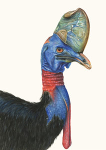 The Cassowary, with its thick, wrinkled crest
