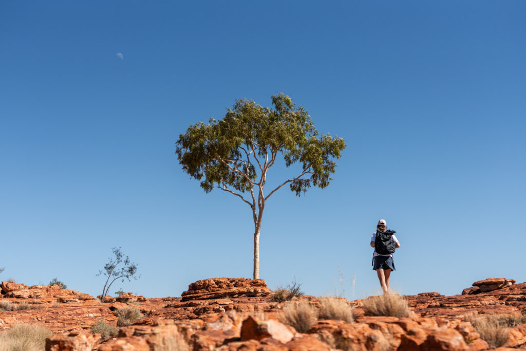 A lone Ghost Gum against the red soil of the outback