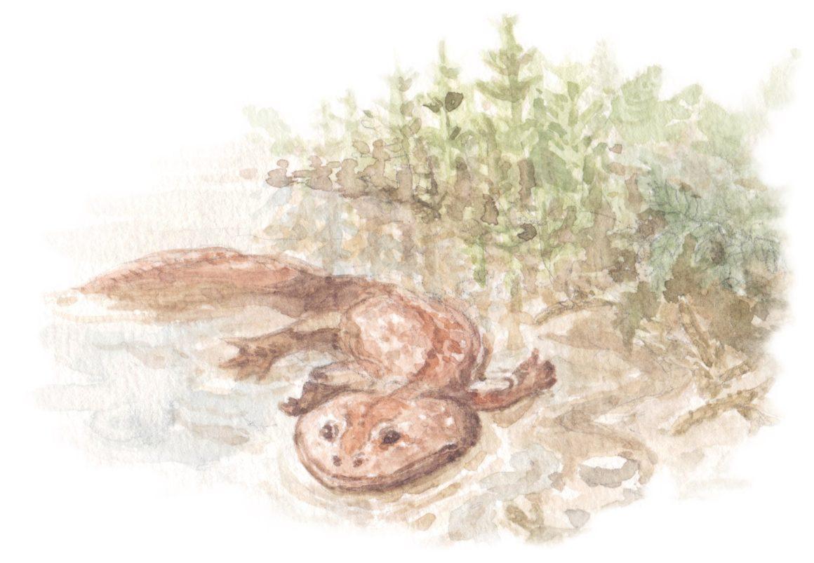 Australia's river-monster of the dinosaur age