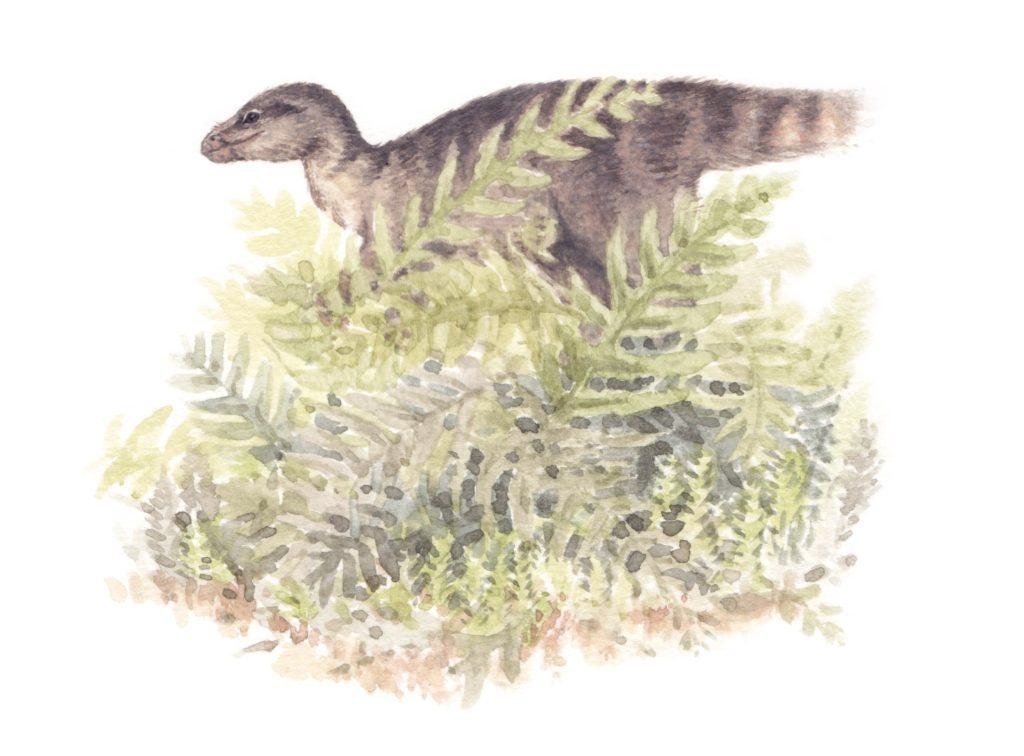 Leaellynasaura was a small dinosaur of Cretaceous-era Victoria. Original illustration by Cameron Brideoake.