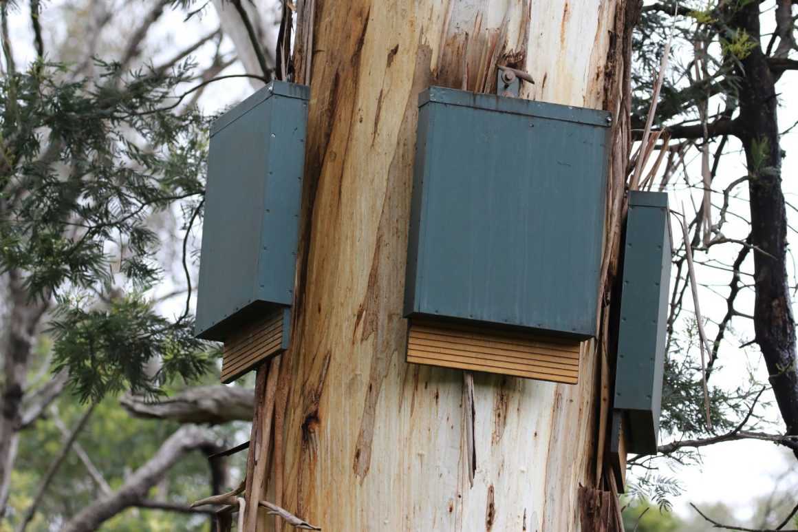 Bat boxes set up in Shepherds Bush, Melbourne