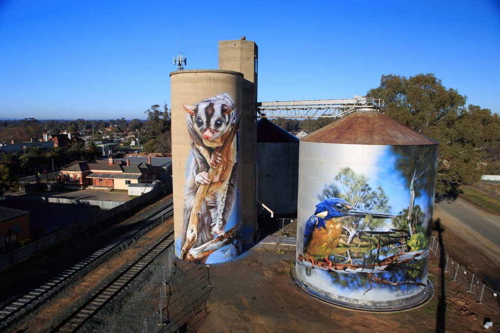 Silo art in the Victorian town of Rochester, featuring beloved locals the Azure Kingfisher and the Sugar Glider.
