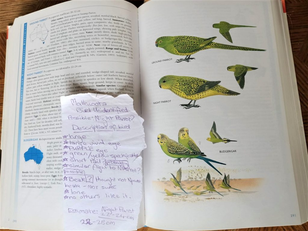 A slip of paper in my field guide from when I was maybe 11, trying to identify a 'mystery bird'. A tiny part of me always believed I'd found the elusive Night Parrot, despite the habitat and distribution being completely wrong.
