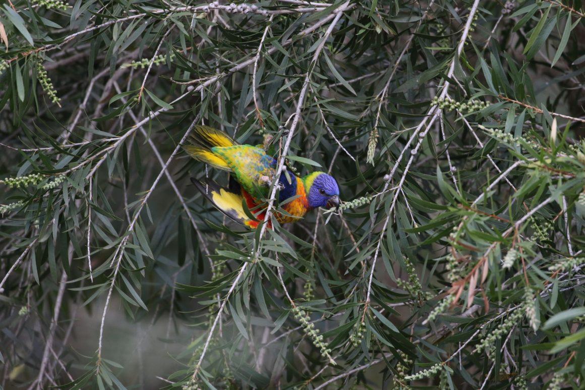 Bird week round-up: our team's favourite Aussie birds