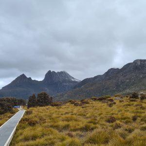 Perilous passage: tackling Tasmania's roadkill problem
