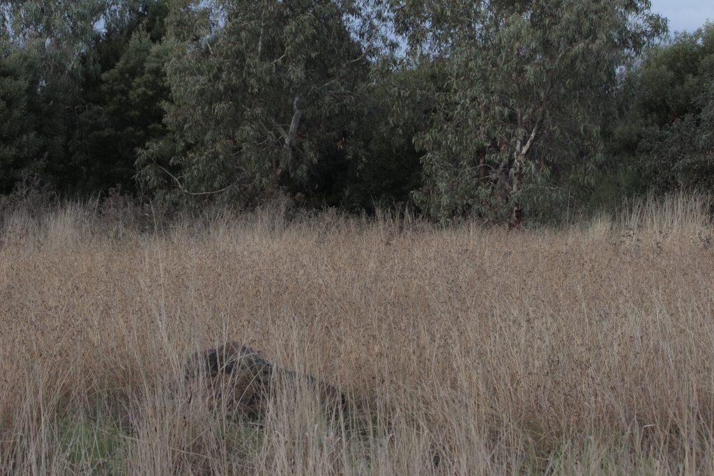 Remnant grassland beside Jones Creek in Melbourne's west.