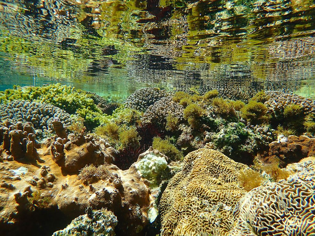 Norfolk Island features one of the most southerly coral reefs in the world. Image is courtesy of Susan Prior.
