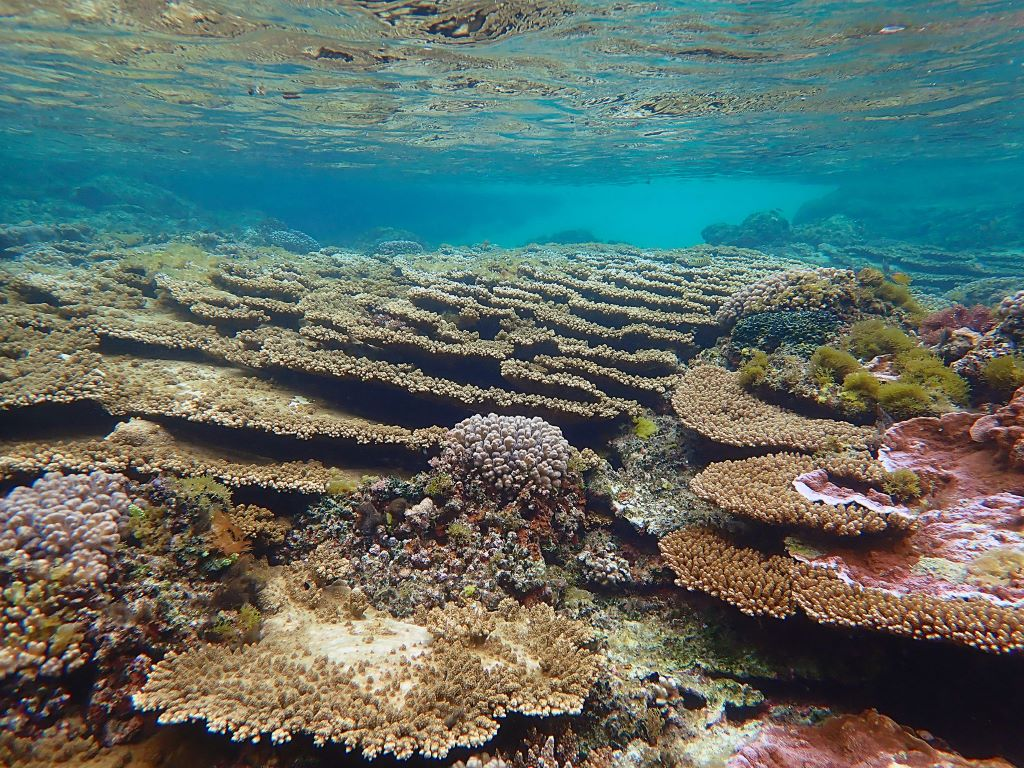 An example of a healthy coral reefs on Northfolk Island. Image courtesy of Susan Prior.